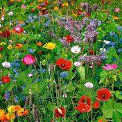 {sunday} sounds | wildflowers by tom petty