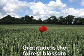 monday muse | gratitude