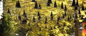 spirit of the season | 34 spooky songs